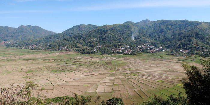 flores-ruteng-spider-web-ricefield
